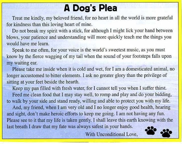 graphic about Rainbow Bridge Poem for Dogs Printable called Aran Isle Staffords - Staffordshire Bull Terriers - Recollections